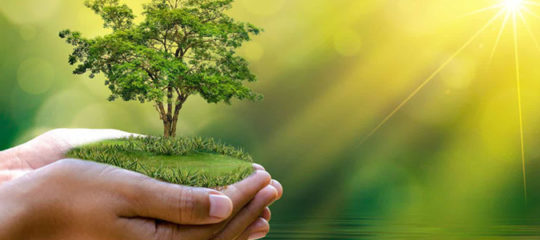 Prendre soin de vos arbres